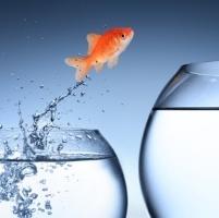 goldfisch-jumping200sq
