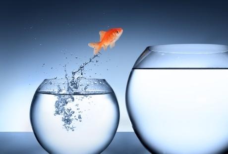goldfisch-jumping460