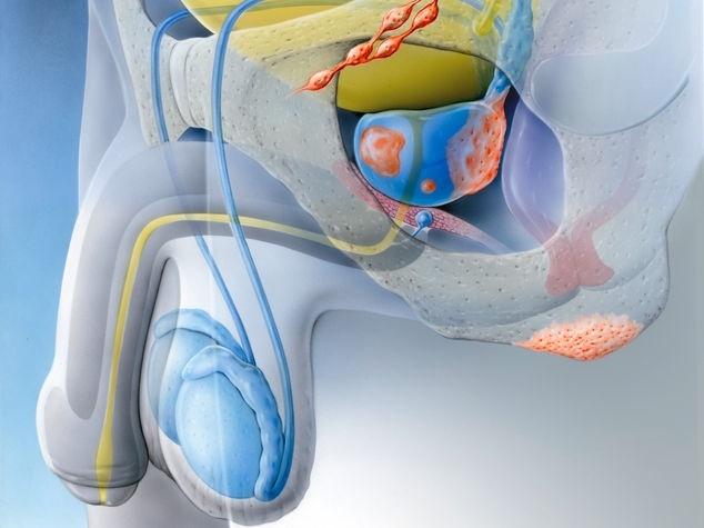Suche nach Tag: prostata massage