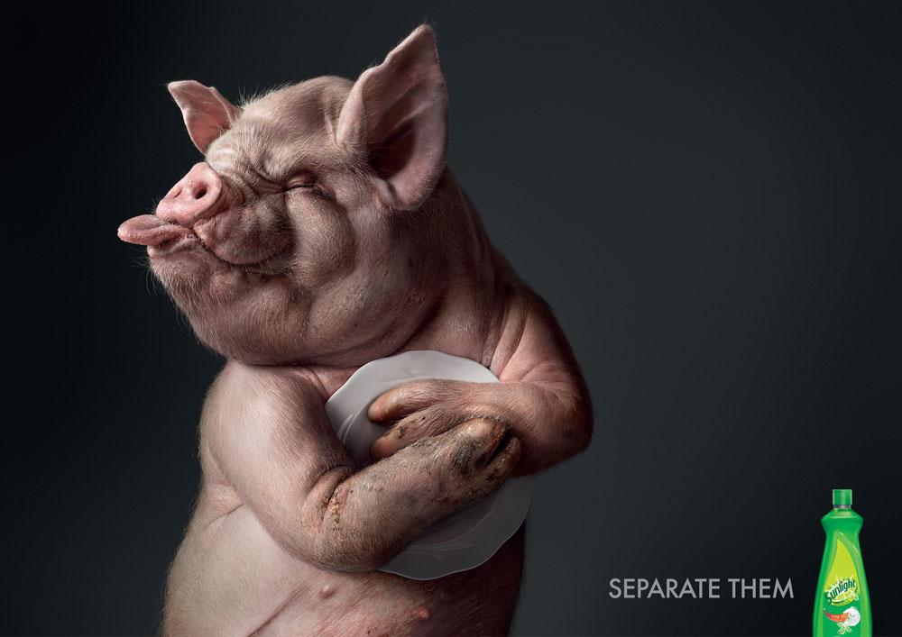 Sunlight_Pig