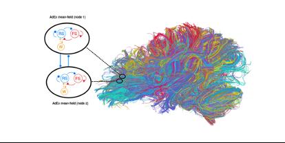Brain Models 3.png