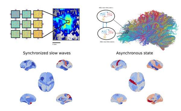 red-blue-spontaneous-brain-activity-2mb.jpg