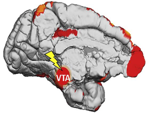 Researchers discover how the brain learns from subconscious stimuli.png