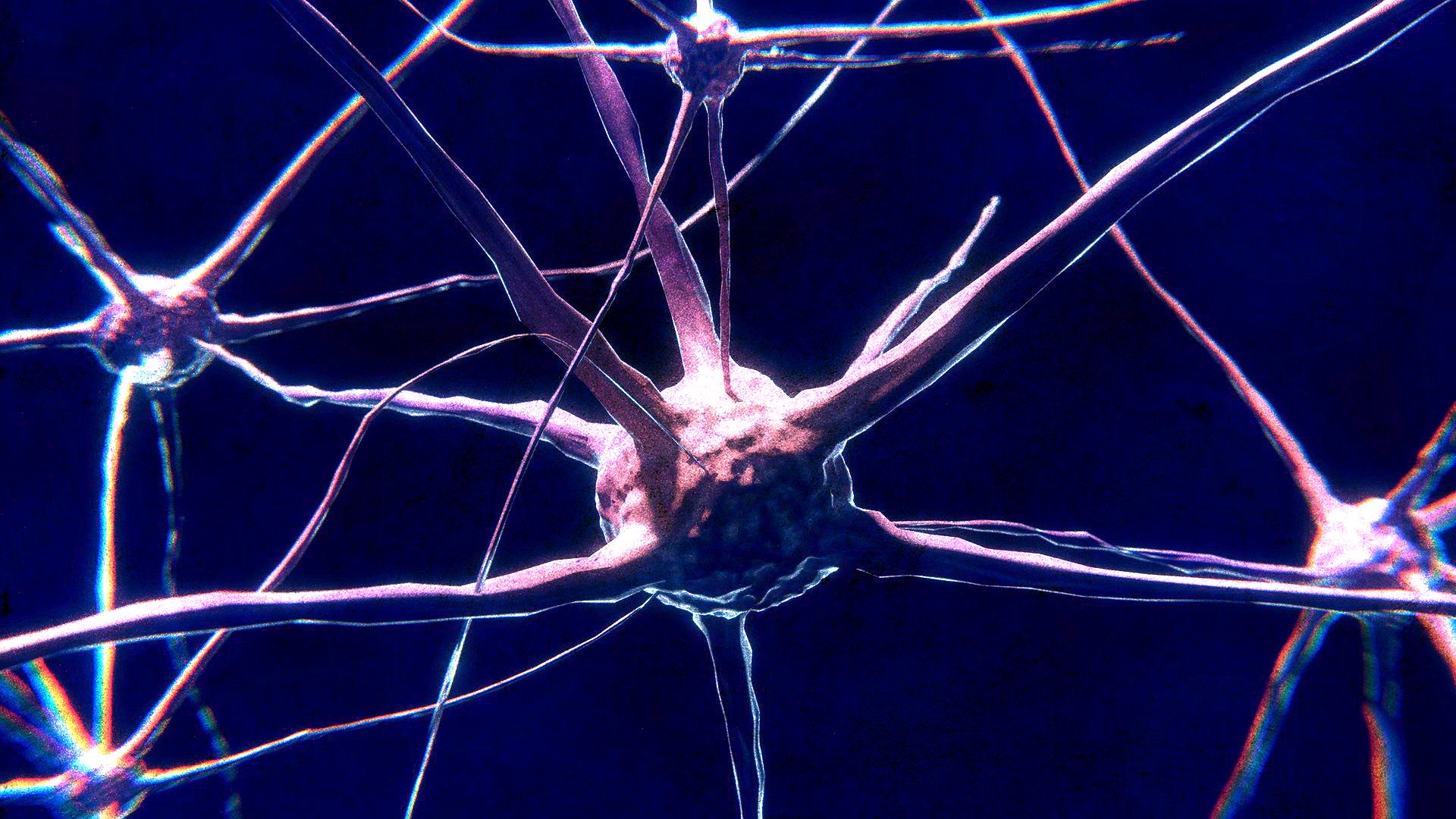neuron-1.png