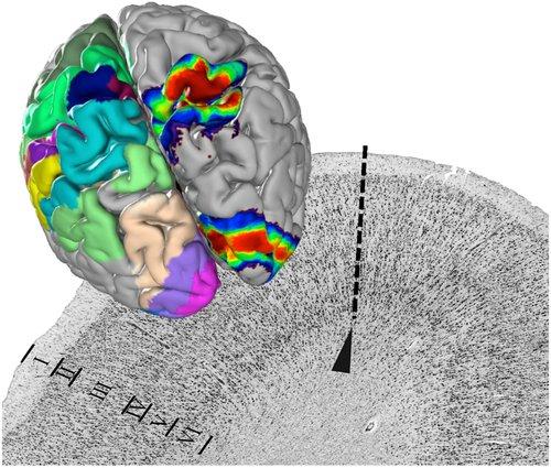 julich-brain.jpg