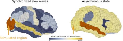 Brain Models 1.png