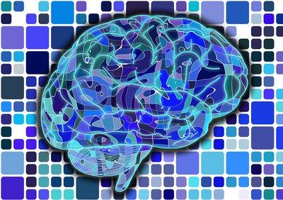 brain-951845_1920.jpg